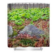 Spring Renewal Shower Curtain
