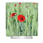 Spring Scene Green Wheat And Poppy Flowers Shower Curtain