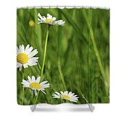 Spring Scene White Wild Flowers Shower Curtain