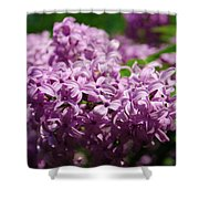 Spring Series #02 Shower Curtain