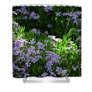 Spring Series #03 Shower Curtain