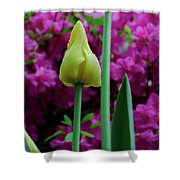Spring Series #05 Shower Curtain
