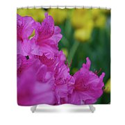 Spring Series #06 Shower Curtain