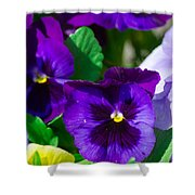Spring Series #15 Shower Curtain