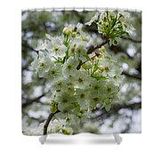 Spring Series #22 Shower Curtain
