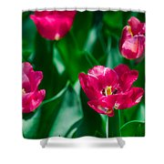 Spring Series #28 Shower Curtain