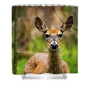 Spring Shed Shower Curtain