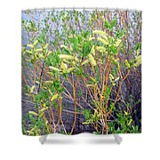 Spring Shoreline Shower Curtain