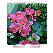 Spring Show 17 Begonias And Roses Shower Curtain