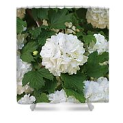 Spring Snowball Shower Curtain