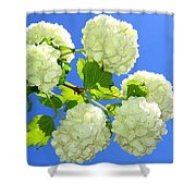 Spring Snowballs Shower Curtain