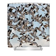 Spring Snows Shower Curtain