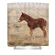 Spring Storm Foal Shower Curtain