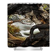 Spring Textures Shower Curtain