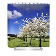 Spring Time #5 Shower Curtain