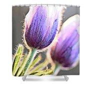 Spring Time Crocus Flower Shower Curtain
