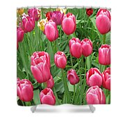 Spring Time Floral Tulips Galore Shower Curtain
