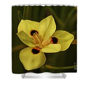 Spring Time In Florida Shower Curtain