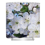 Spring Time Shower Curtain