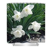 Spring Time Trumpets  Shower Curtain