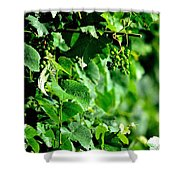 Spring Time Vineyards Shower Curtain
