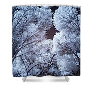 Spring Trees And Shadows Shower Curtain