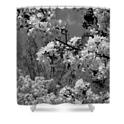 Spring Trees - B And W Shower Curtain