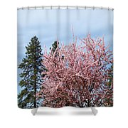 Spring Trees Bossoming Landscape Art Prints Pink Blossoms Clouds Sky  Shower Curtain