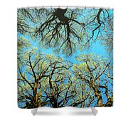 Spring Trees Shower Curtain