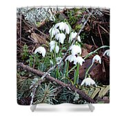 Spring Trillium Shower Curtain by Charles Robinson