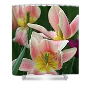 Spring Tulips 151 Shower Curtain
