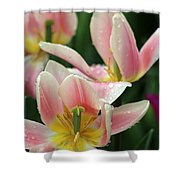 Spring Tulips 152 Shower Curtain