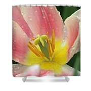 Spring Tulips 154 Shower Curtain
