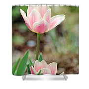 Spring Tulips 160 Shower Curtain