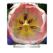 Spring Tulips 174 Shower Curtain