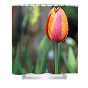 Spring Tulips 179 Shower Curtain