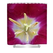 Spring Tulips 187 Shower Curtain