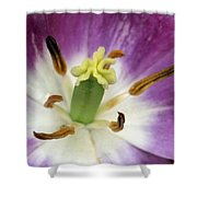 Spring Tulips 199 Shower Curtain