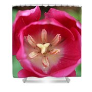 Spring Tulips 200 Shower Curtain