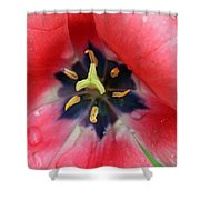 Spring Tulips 203 Shower Curtain