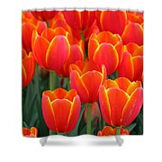 Spring Tulips 206 Shower Curtain