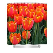 Spring Tulips 207 Shower Curtain
