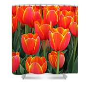Spring Tulips 210 Shower Curtain
