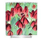 Spring Tulips - Photopower 3012 Shower Curtain