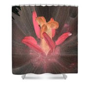Spring Tulips - Photopower 3105 Shower Curtain