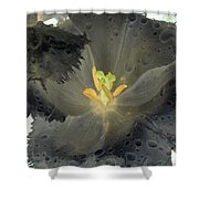 Spring Tulips - Photopower 3106 Shower Curtain