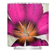 Spring Tulips - Photopower 3110 Shower Curtain