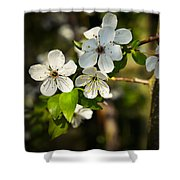 Spring Twig With White Florets Shower Curtain