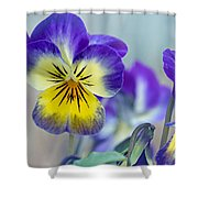 Spring Violas Shower Curtain