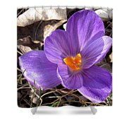 Spring Violet Shower Curtain
